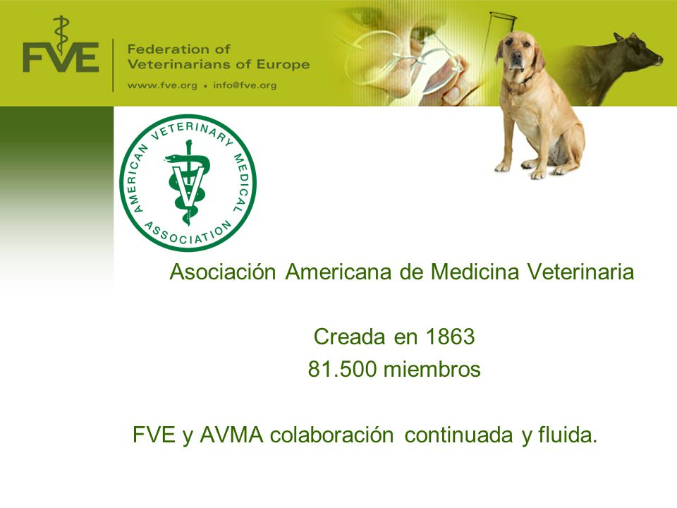 Asociación Americana de Medicina Veterinaria