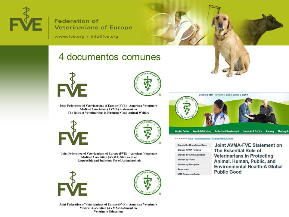 4 documentos comunes