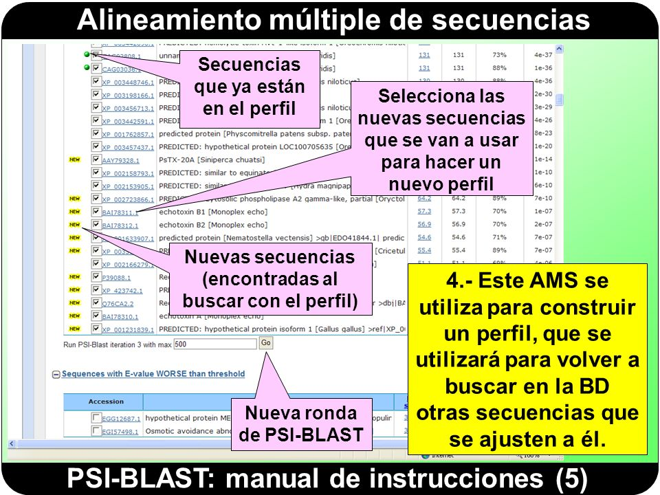 PSI-BLAST: manual de instrucciones (5)