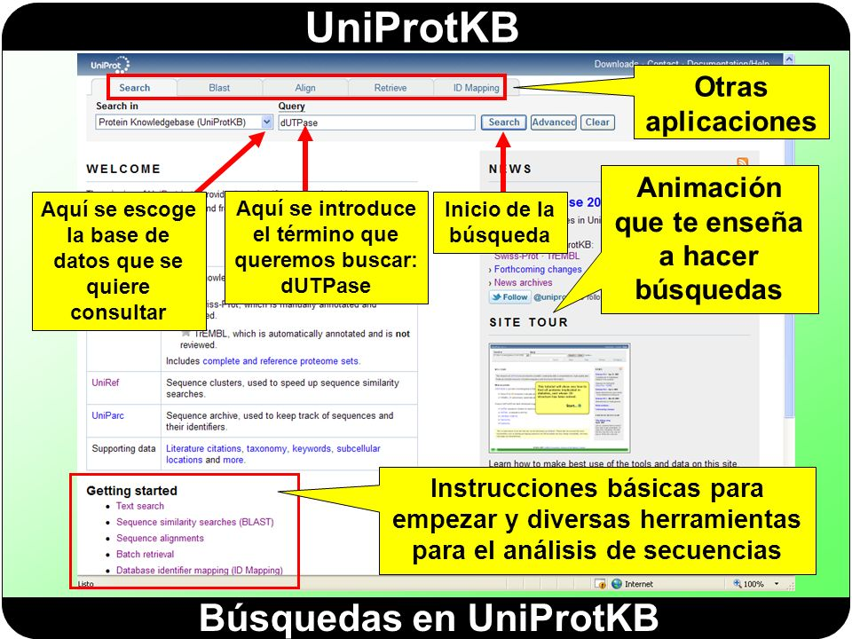 Búsquedas en UniProtKB
