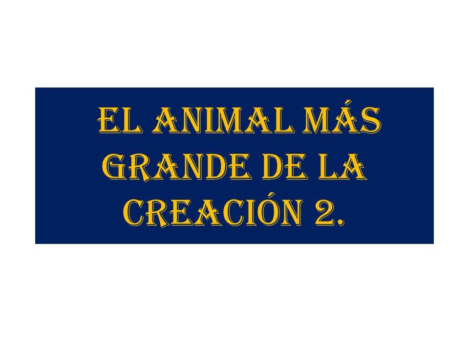 EL ANIMAL MÁS GRANDE DE LA CREACIÓN 2.