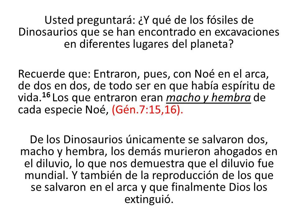 Usted preguntará: ¿Y qué de los fósiles de Dinosaurios que se han encontrado en excavaciones en diferentes lugares del planeta.
