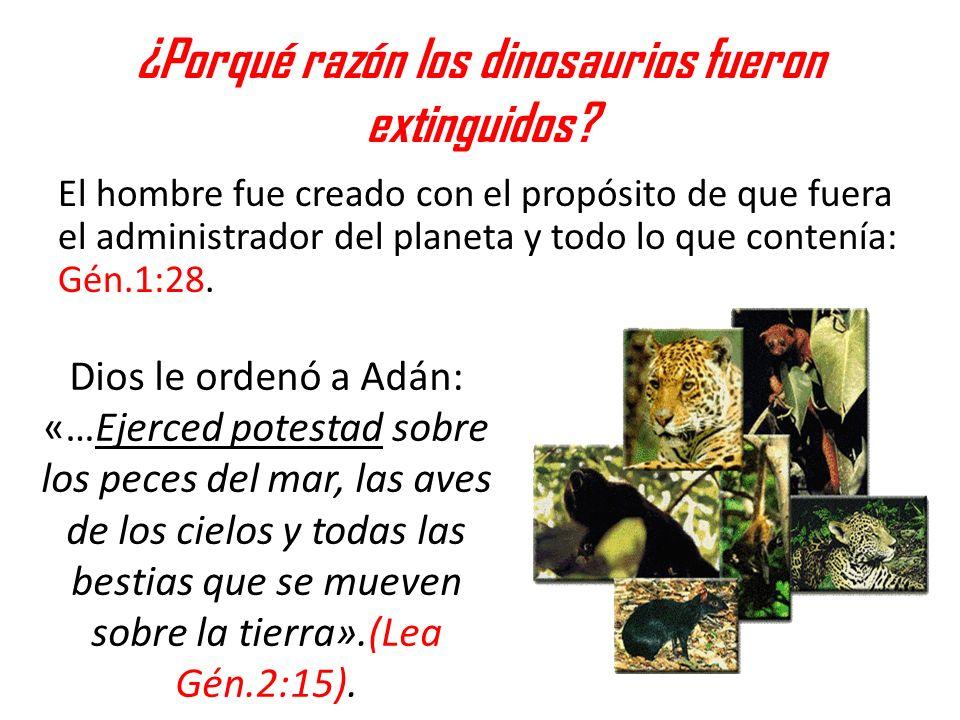 ¿Porqué razón los dinosaurios fueron extinguidos