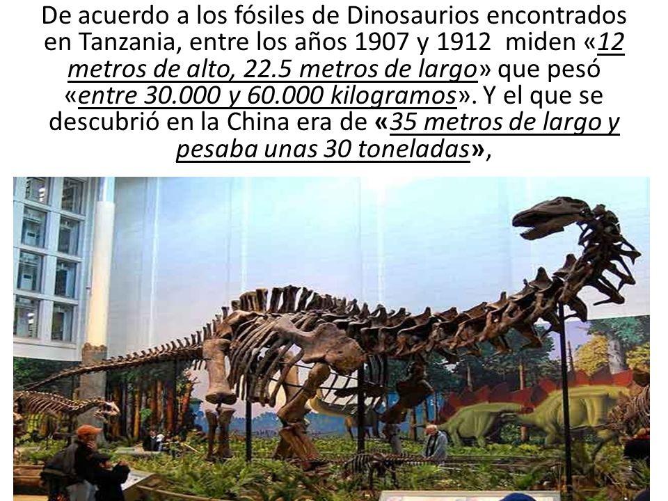 De acuerdo a los fósiles de Dinosaurios encontrados en Tanzania, entre los años 1907 y 1912 miden «12 metros de alto, 22.5 metros de largo» que pesó «entre 30.000 y 60.000 kilogramos».