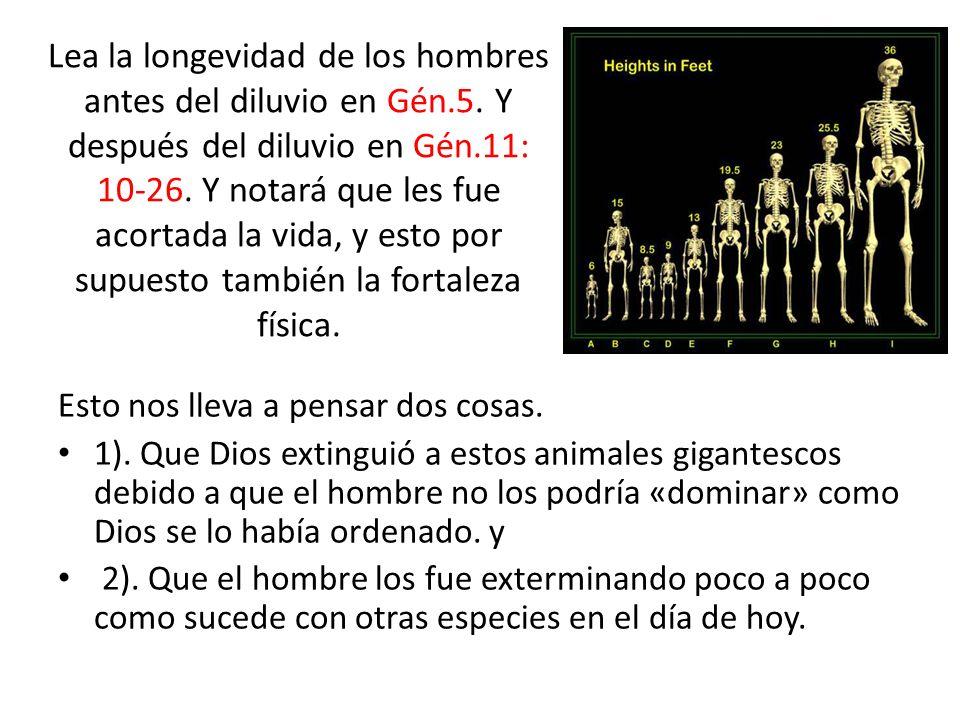 Lea la longevidad de los hombres antes del diluvio en Gén. 5