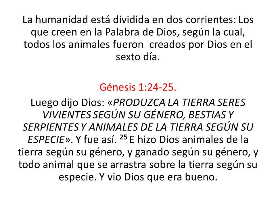 La humanidad está dividida en dos corrientes: Los que creen en la Palabra de Dios, según la cual, todos los animales fueron creados por Dios en el sexto día.