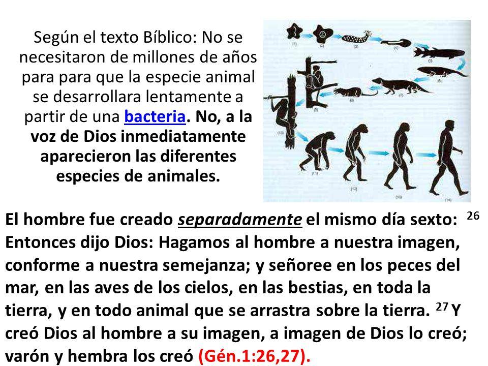 Según el texto Bíblico: No se necesitaron de millones de años para para que la especie animal se desarrollara lentamente a partir de una bacteria. No, a la voz de Dios inmediatamente aparecieron las diferentes especies de animales.