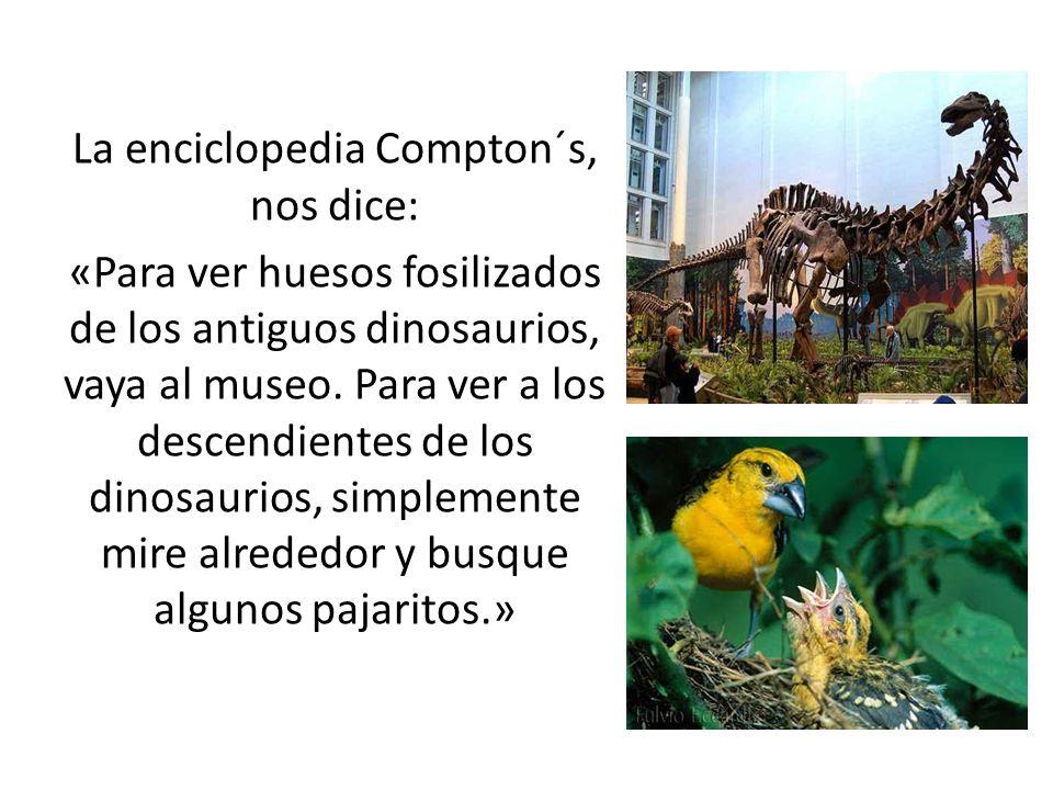La enciclopedia Compton´s, nos dice: «Para ver huesos fosilizados de los antiguos dinosaurios, vaya al museo.