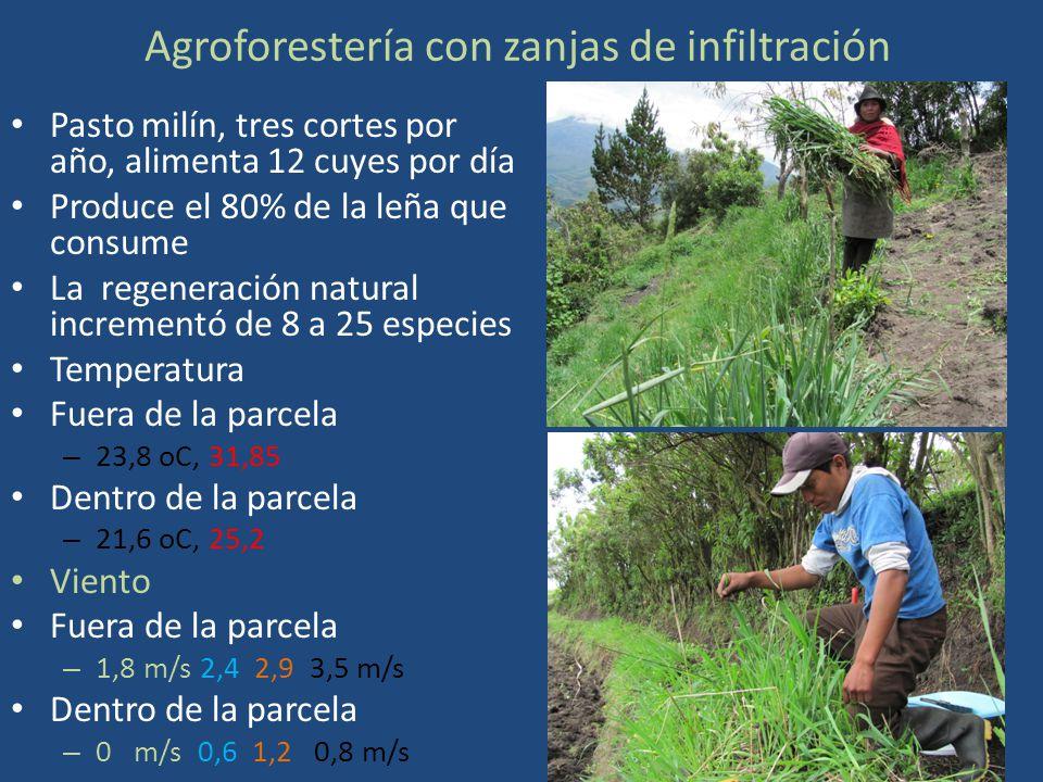 Agroforestería con zanjas de infiltración