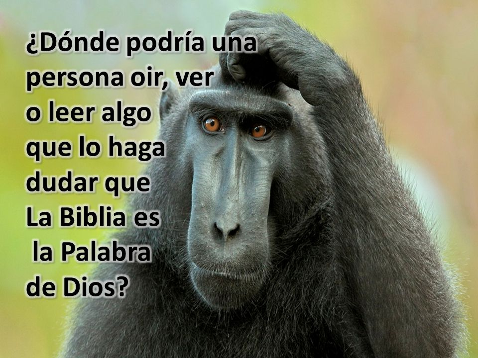 ¿Dónde podría una persona oir, ver. o leer algo. que lo haga. dudar que. La Biblia es. la Palabra.
