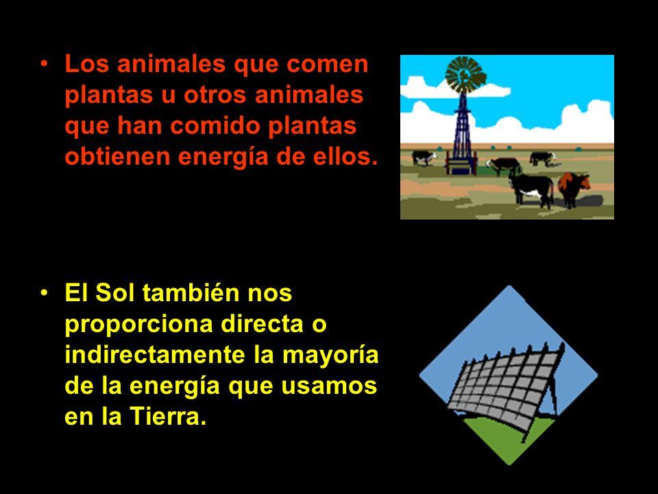 Los animales que comen plantas u otros animales que han comido plantas obtienen energía de ellos.
