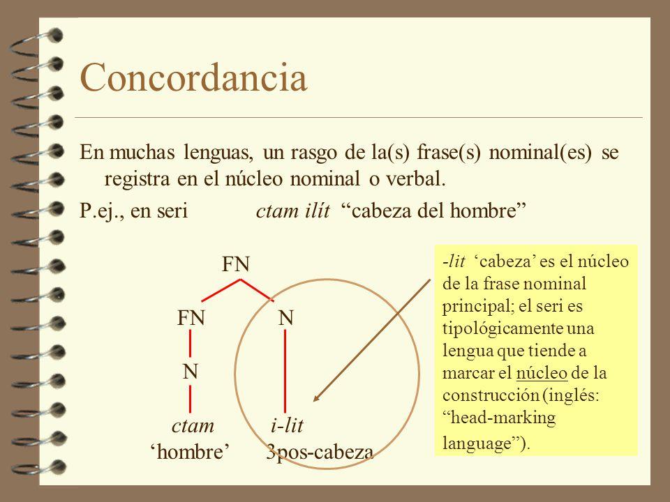 Concordancia En muchas lenguas, un rasgo de la(s) frase(s) nominal(es) se registra en el núcleo nominal o verbal.