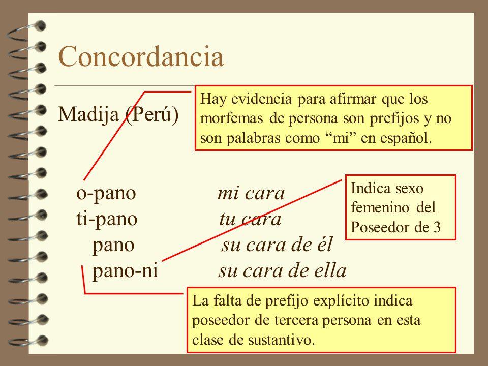 Concordancia Hay evidencia para afirmar que los morfemas de persona son prefijos y no son palabras como mi en español.