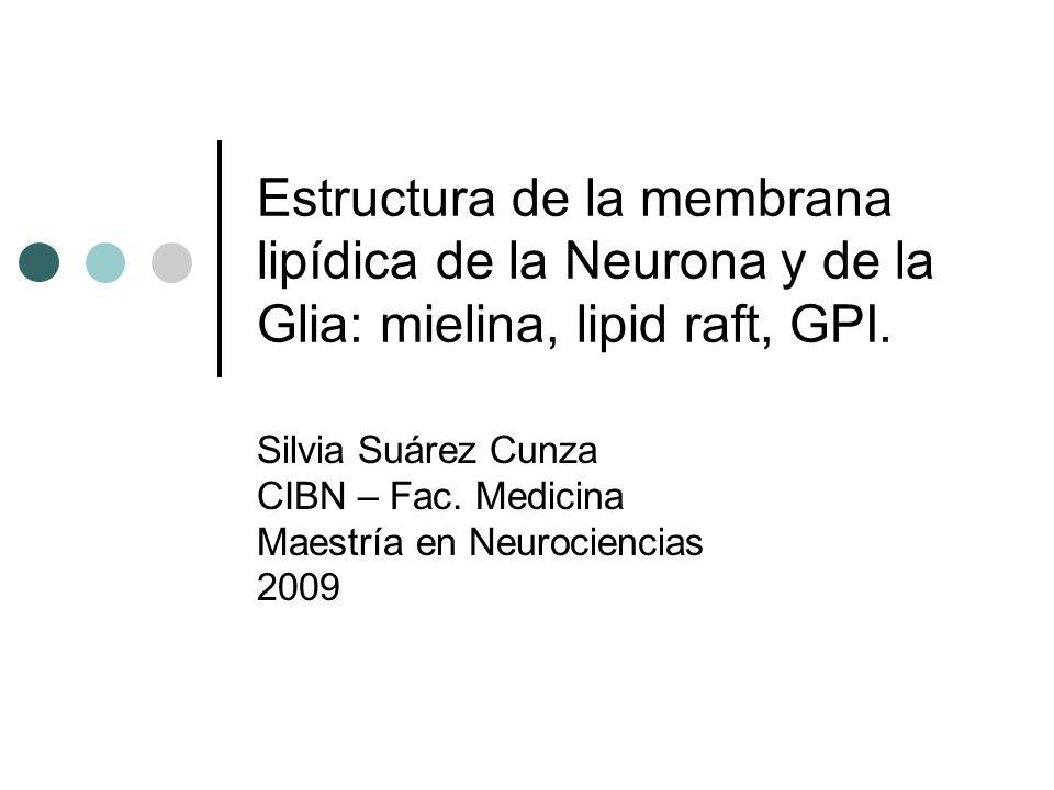 Estructura de la membrana lipídica de la Neurona y de la Glia: mielina, lipid raft, GPI.