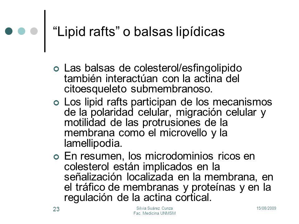 Lipid rafts o balsas lipídicas