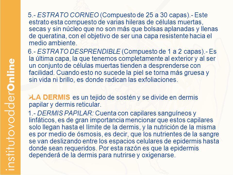 5. - ESTRATO CORNEO (Compuesto de 25 a 30 capas)