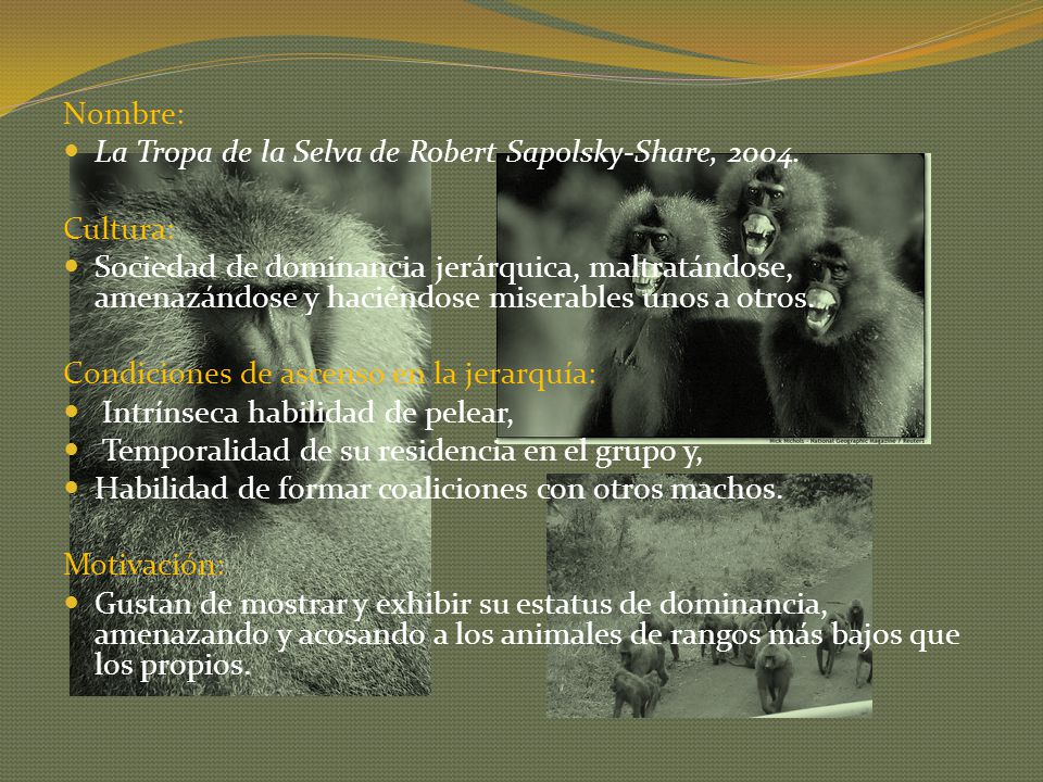 Nombre: La Tropa de la Selva de Robert Sapolsky-Share, 2004. Cultura: