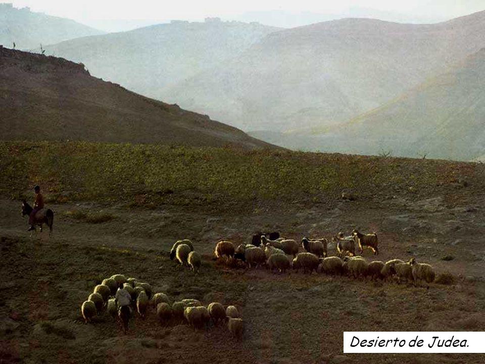 Desierto de Judea.