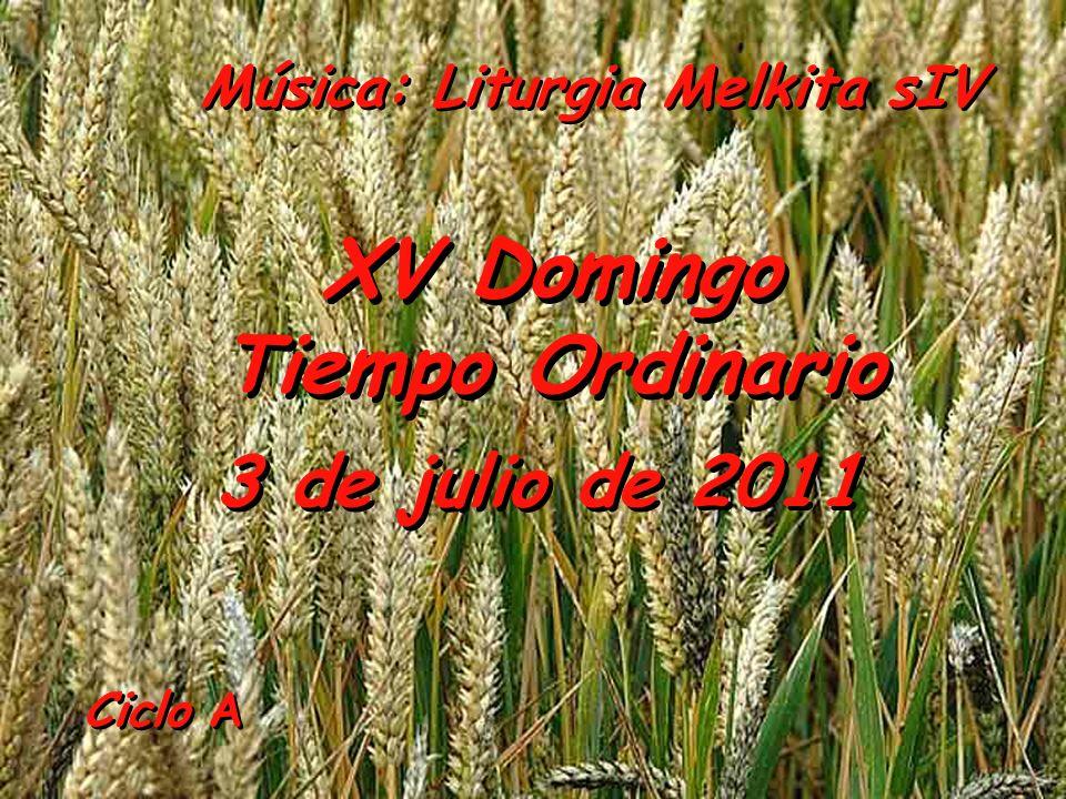 XV Domingo Tiempo Ordinario