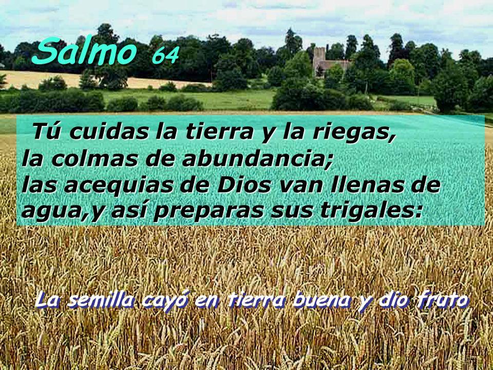 Salmo 64 Tú cuidas la tierra y la riegas, la colmas de abundancia; las acequias de Dios van llenas de agua,y así preparas sus trigales: