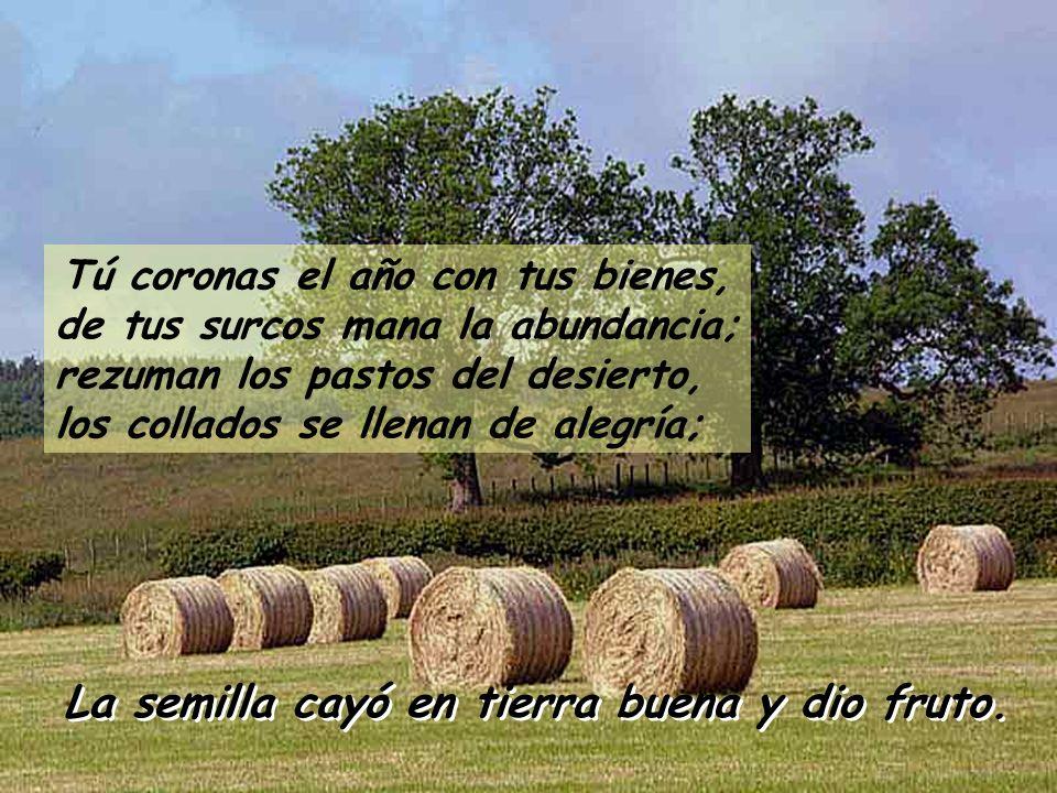 Tú coronas el año con tus bienes, de tus surcos mana la abundancia; rezuman los pastos del desierto, los collados se llenan de alegría;