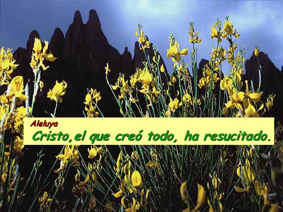Cristo,el que creó todo, ha resucitado.