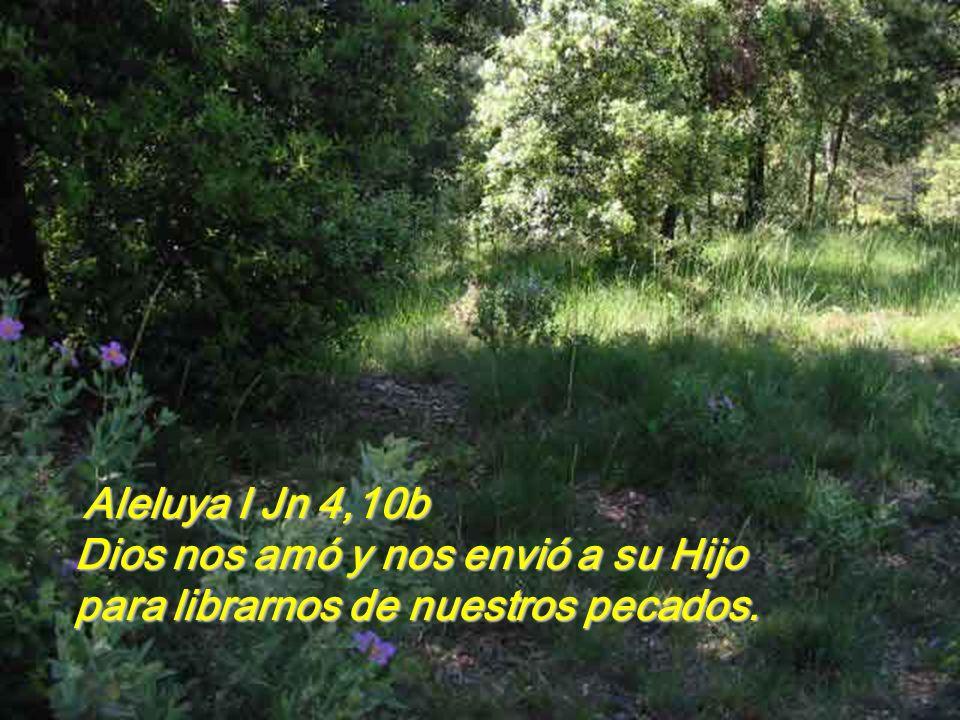 Aleluya I Jn 4,10b Dios nos amó y nos envió a su Hijo para librarnos de nuestros pecados.