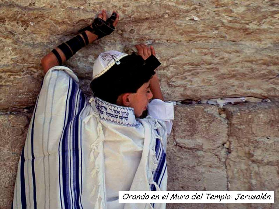 Orando en el Muro del Templo. Jerusalén.