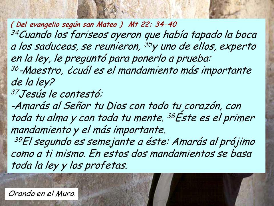 ( Del evangelio según san Mateo ) Mt 22: 34-40