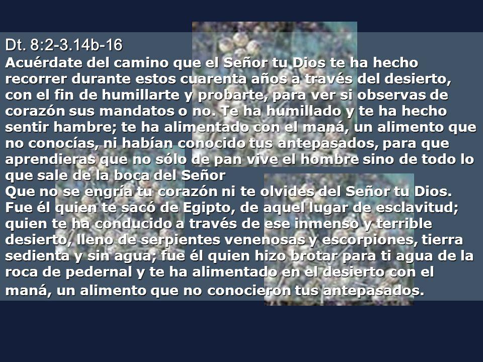 Dt. 8:2-3.14b-16