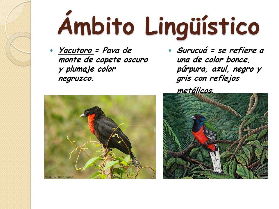 Ámbito Lingüístico Yacutoro = Pava de monte de copete oscuro y plumaje color negruzco.