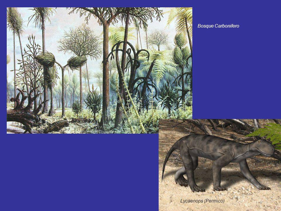 Bosque Carbonifero Lycaenops (Permico)