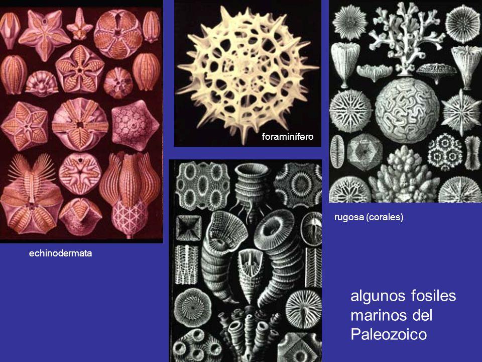 algunos fosiles marinos del Paleozoico