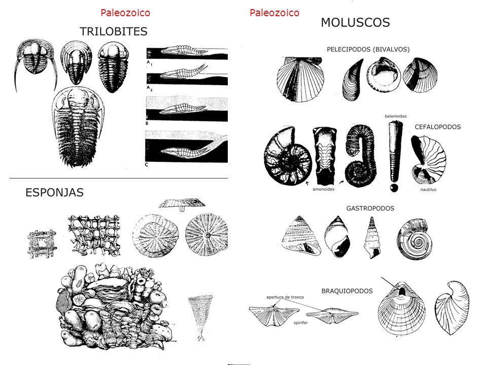 Paleozoico Paleozoico