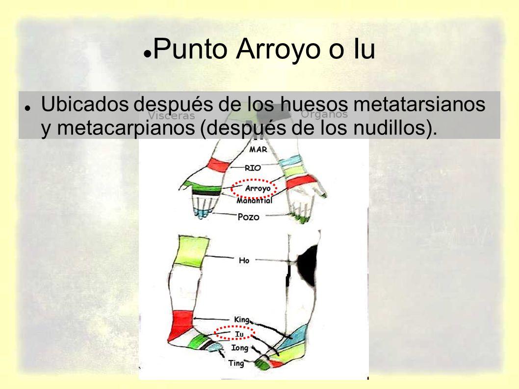 Punto Arroyo o Iu Ubicados después de los huesos metatarsianos y metacarpianos (después de los nudillos).