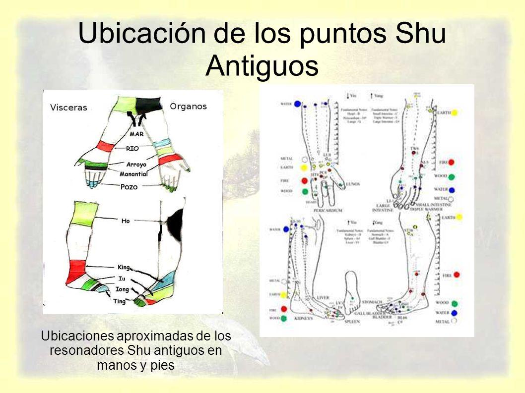 Ubicación de los puntos Shu Antiguos