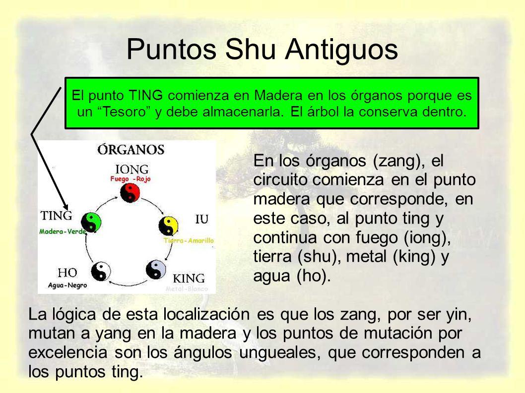 Puntos Shu Antiguos El punto TING comienza en Madera en los órganos porque es un Tesoro y debe almacenarla. El árbol la conserva dentro.