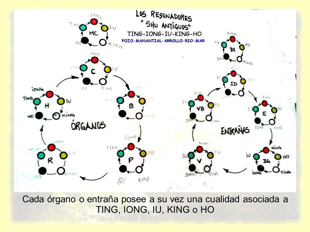 Cada órgano o entraña posee a su vez una cualidad asociada a TING, IONG, IU, KING o HO