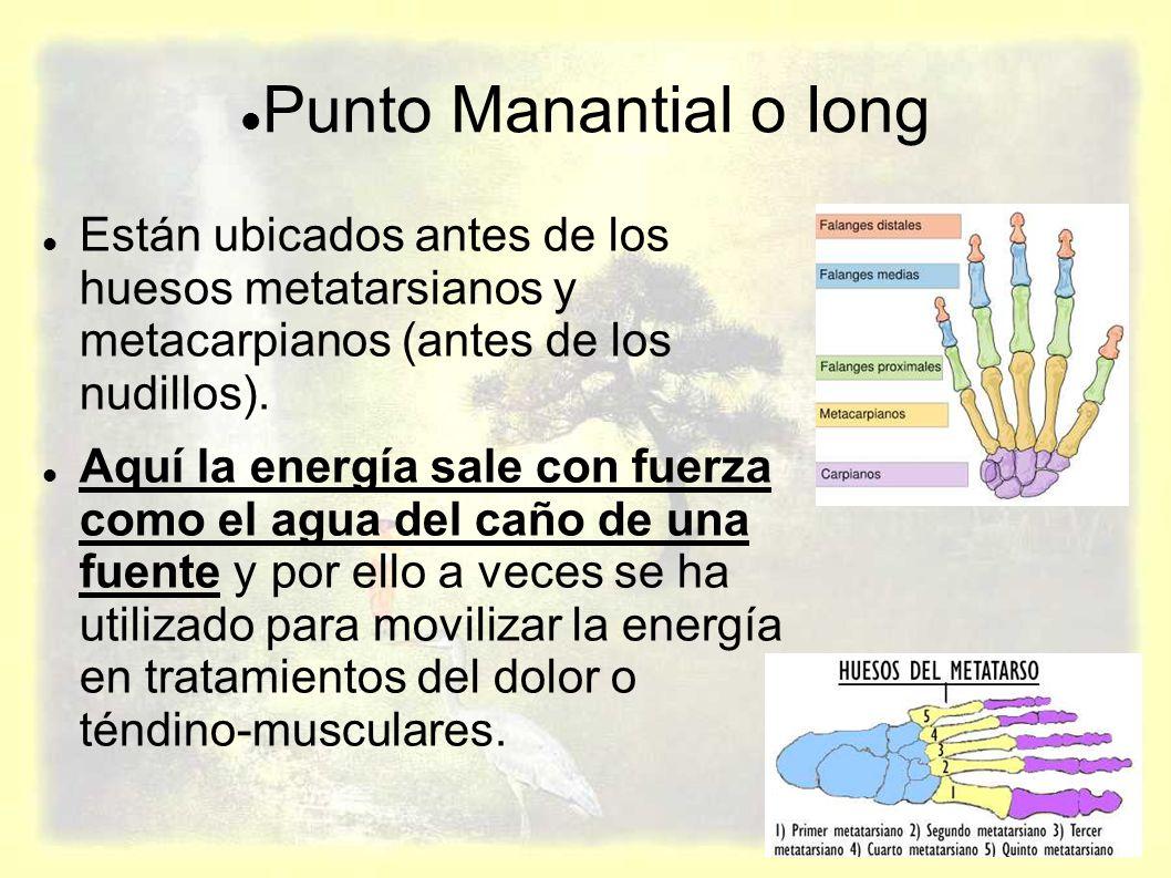 Punto Manantial o Iong Están ubicados antes de los huesos metatarsianos y metacarpianos (antes de los nudillos).