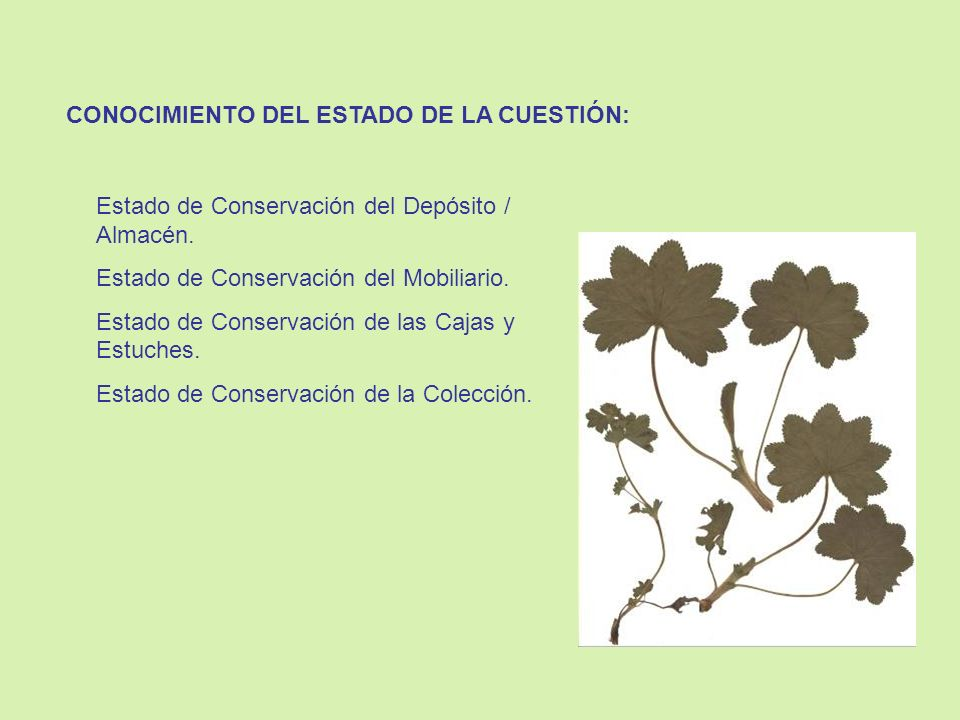 CONOCIMIENTO DEL ESTADO DE LA CUESTIÓN: