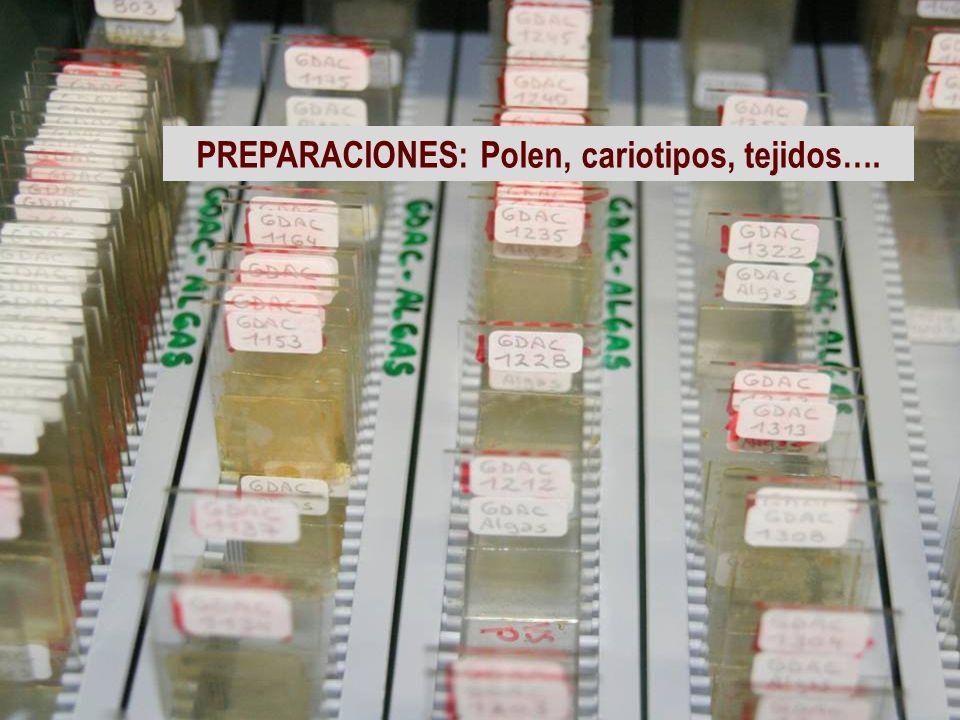 PREPARACIONES: Polen, cariotipos, tejidos….