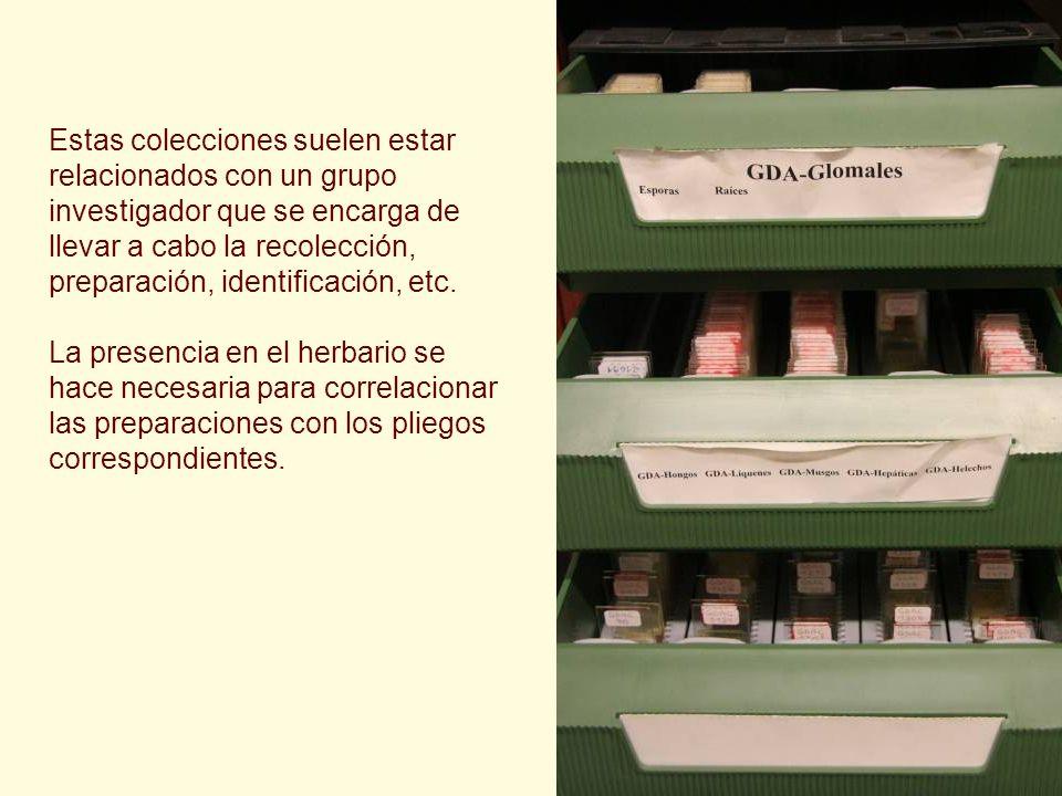 Estas colecciones suelen estar relacionados con un grupo investigador que se encarga de llevar a cabo la recolección, preparación, identificación, etc.