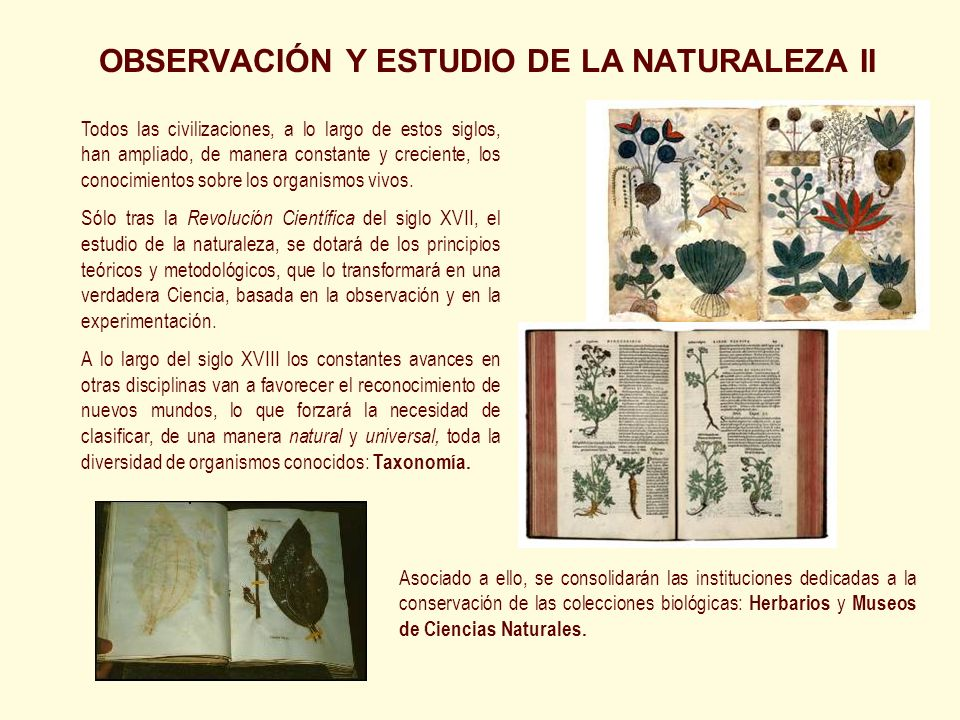 OBSERVACIÓN Y ESTUDIO DE LA NATURALEZA II