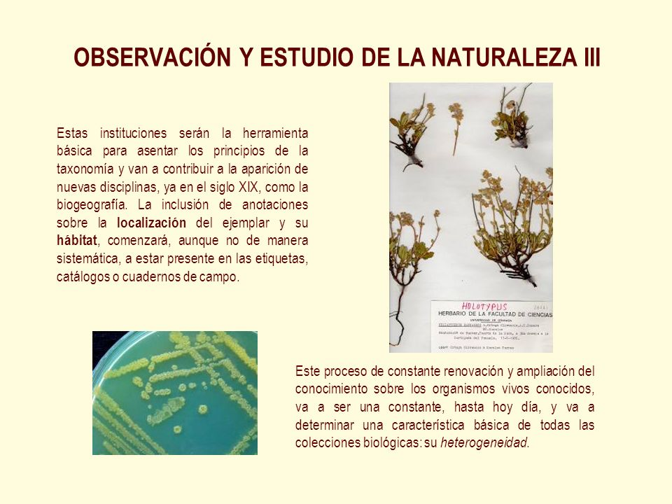 OBSERVACIÓN Y ESTUDIO DE LA NATURALEZA III