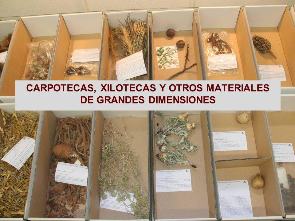 CARPOTECAS, XILOTECAS Y OTROS MATERIALES DE GRANDES DIMENSIONES