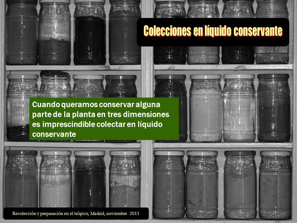 Colecciones en líquido conservante