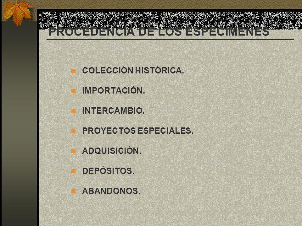 PROCEDENCIA DE LOS ESPECIMENES