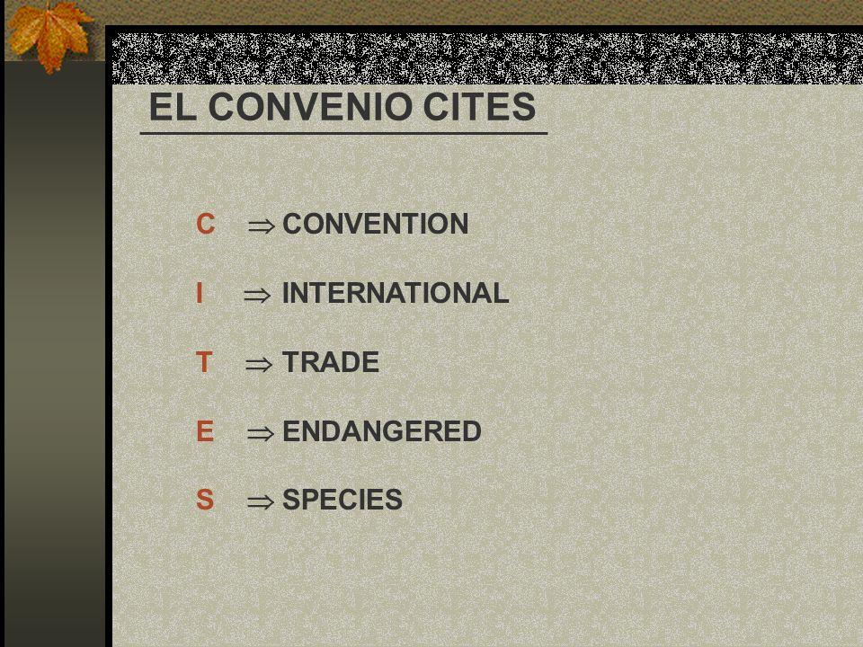 EL CONVENIO CITES C  CONVENTION I  INTERNATIONAL T  TRADE