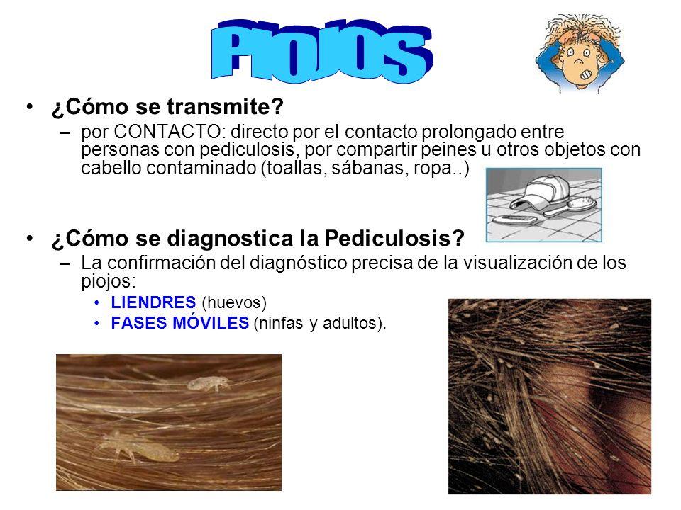 PIOJOS ¿Cómo se transmite ¿Cómo se diagnostica la Pediculosis