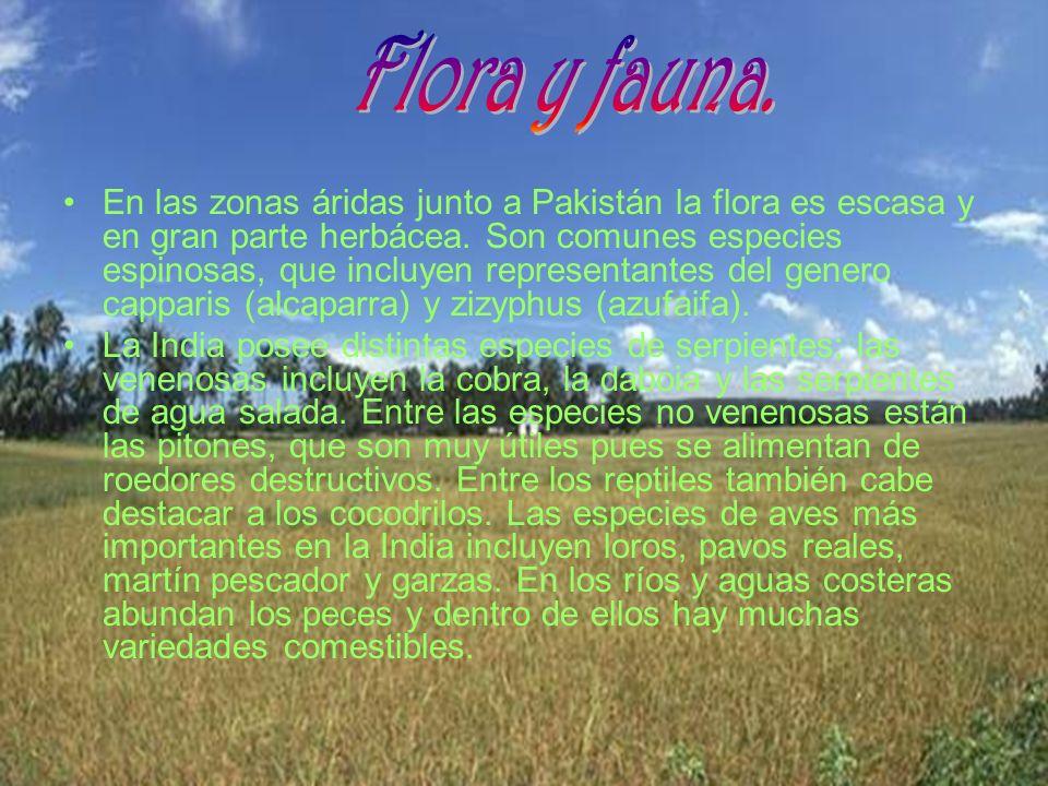 Flora y fauna.